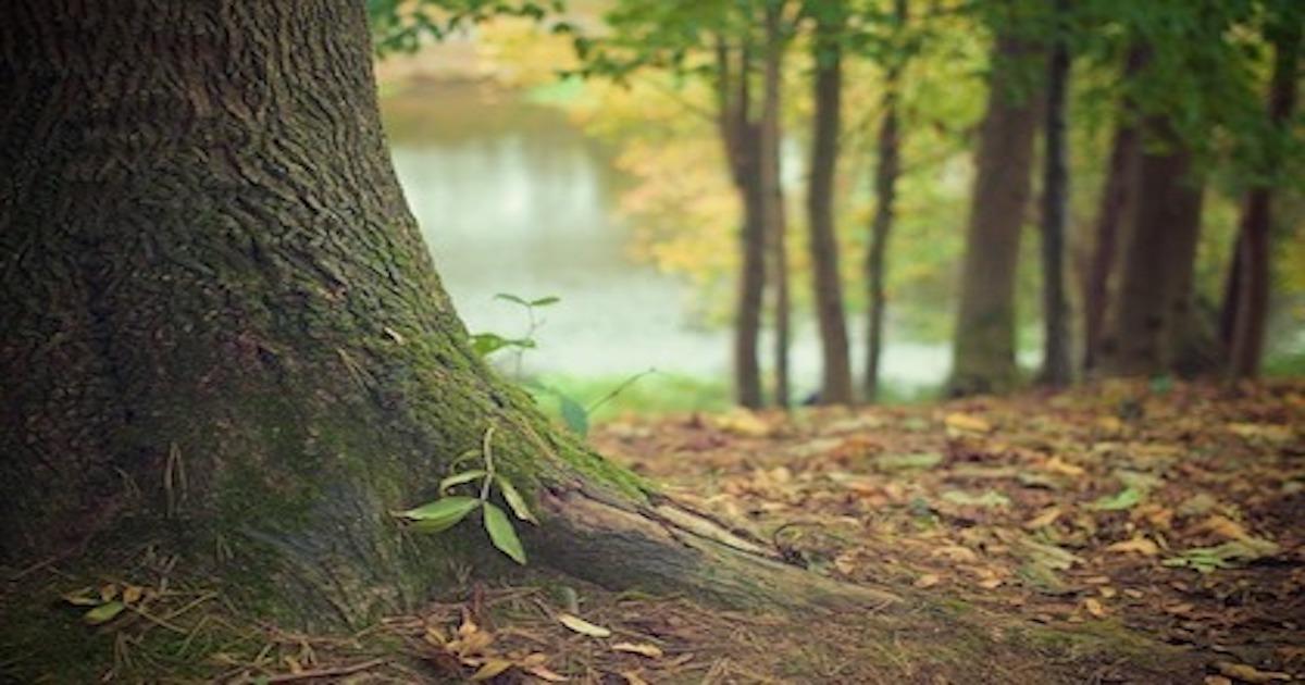 自然豊かな場所